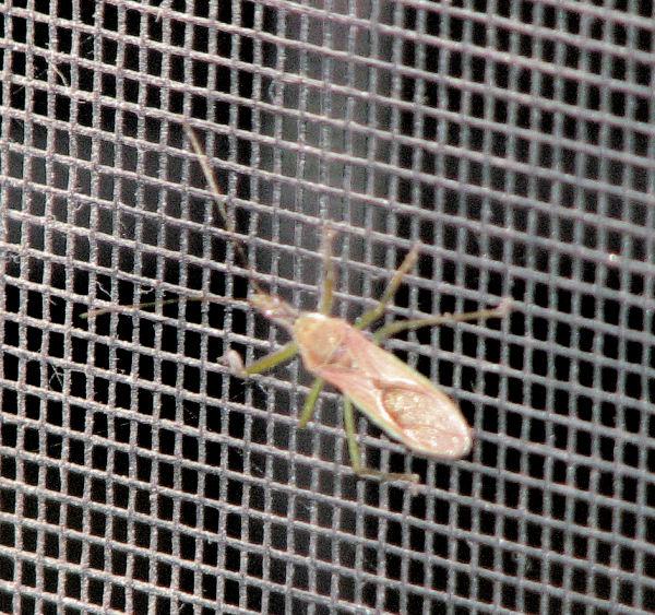 Carmel Valley Cricket