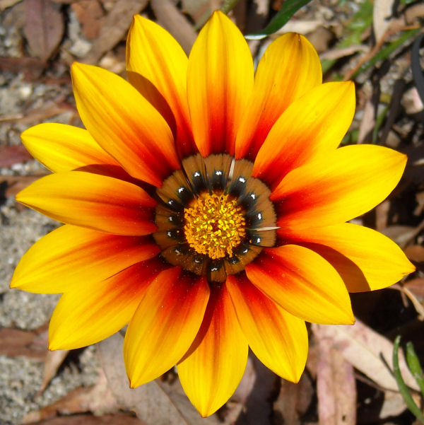 Magnificent January Flower in Carmel Valley