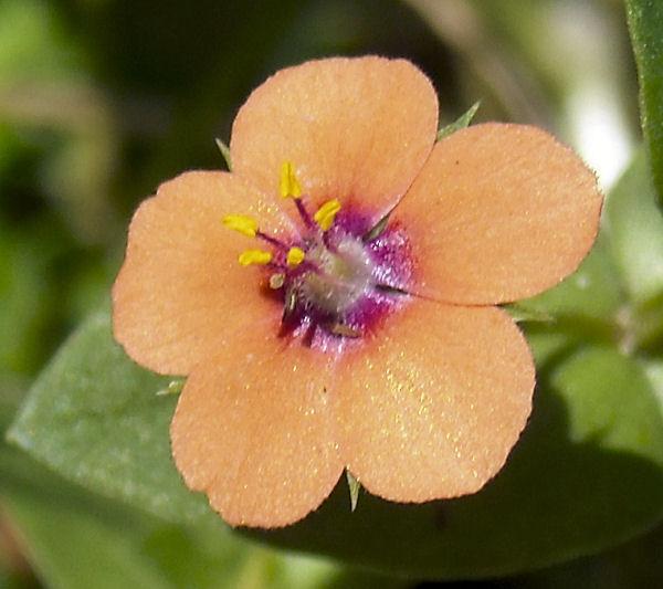 2010_0424_flower