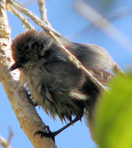 2010_0616_bird