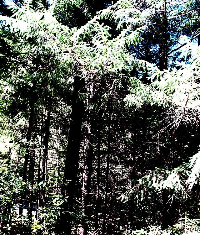 2013_0420_trees
