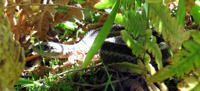 Nice snake!